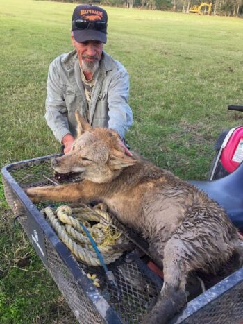 Boudreaux with coyote